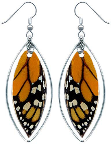 (Real Monarch Butterfly Wing Earrings in Sterling Silver - Handmade Insect Jewelry )