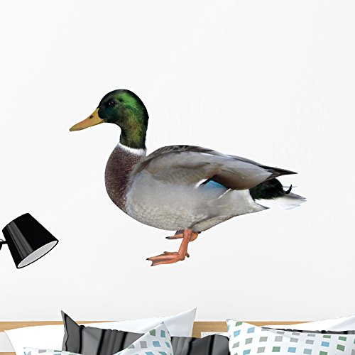 - Wallmonkeys Male Mallard Duck Wall Decal Peel Stick Animal Graphics (36 in W x 24 in H) WM202481