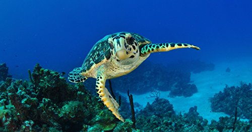 Amazing Scuba Diving Experience in the Cayman Islands for One - Tinggly Voucher/Gift Card in a Gift ()