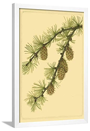 Amazon.com: ArtEdge Pine Cone Pl. 269 White Framed Wall Art Print ...
