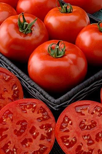 Phoenix Hybrid Tomato Seeds - bush type seldom needs staking!!!!(25 - Seeds)
