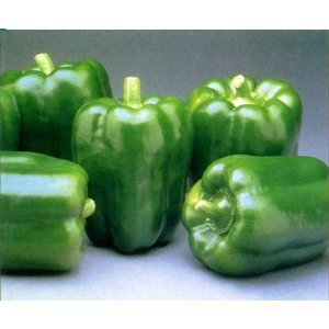 GREEN BELL PEPPERS LARGE FRESH FRUIT PRODUCE VEGETABLES EACH (1)