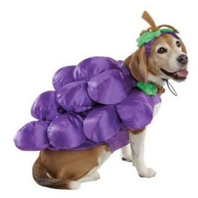 Amazon.com: Racimo de uvas traje de perro con sombrero: Mascotas