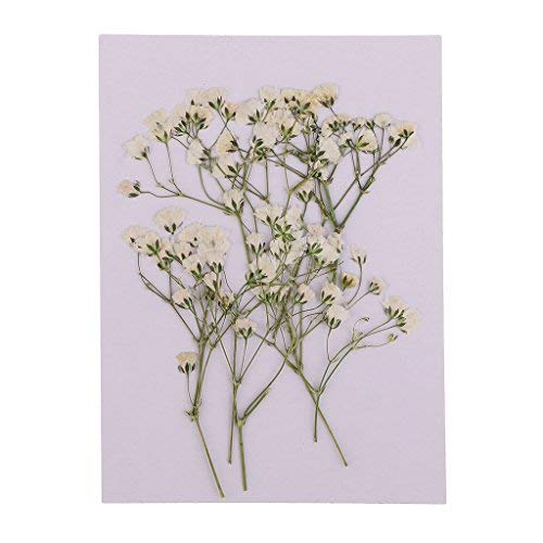 GOUPPER 20 Pieces 6-16 cm Beautiful Pressed Sage Flower Babysbreath Dried Flowers Embellishments for Art Craft Scrapbooking Epoxy Resin Jewelry Making DIY Phone Case Decorations
