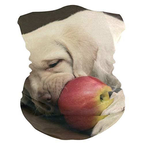 Fruits That Are Not Safe For Dogs Balaclava Womens Headband Scarf Mens Versatile Bandana, Muffler, Neck Gaiter, Magic, Headwrap Sweatband