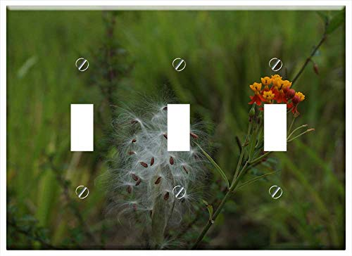Switch Plate Triple Toggle - Cotton Tree Seed Seeds Cotton White Plant Fluffy