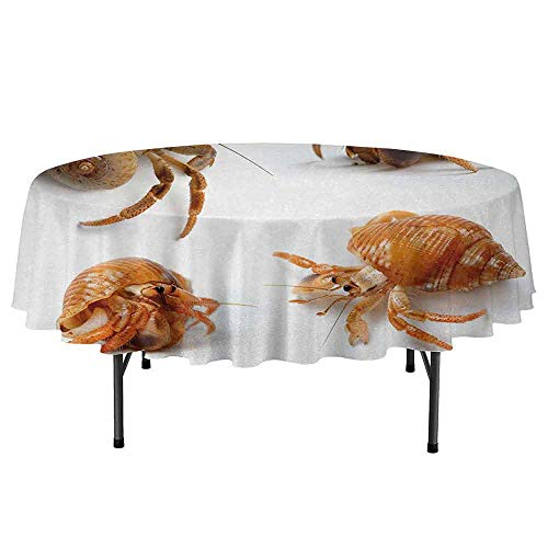 Crabs Easy to Care for Leakproof and Durable Round tablecloths Sea Animals Theme Set of Hermit Crabs from Caribbean Seascape Digital Print Outdoor Picnic D51 Inch Marigold and White -