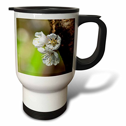 3dRose Alexis Photography - Flowers Sakura Beautiful - Three Japanese apricot flowers, dark brown tree bark, green backdrop - 14oz Stainless Steel Travel Mug (tm_286626_1) by 3dRose