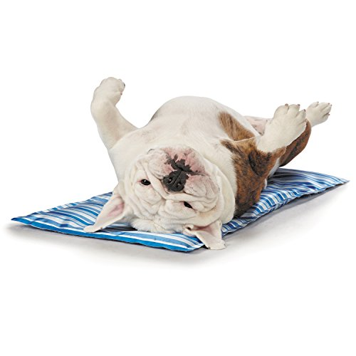 Cool Pup Mats—Comfortable and Innovative Mats Designed to Keep Dogs Cool on Even the Hottest Days