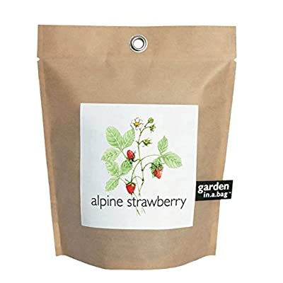 Potting Shed Creations Alpine Strawberry Garden-in-a-Bag : Garden & Outdoor