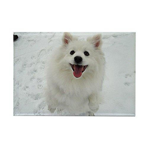 CafePress American Eskimo Dog Rectangle Magnet, 2