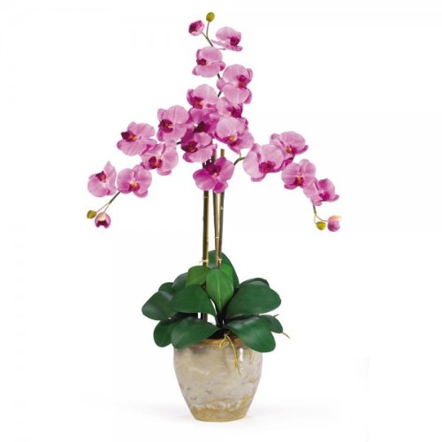 Phalaenopsis Orchid Flower Arrangement (Mauve) (27''H x 23''W x 23''D)