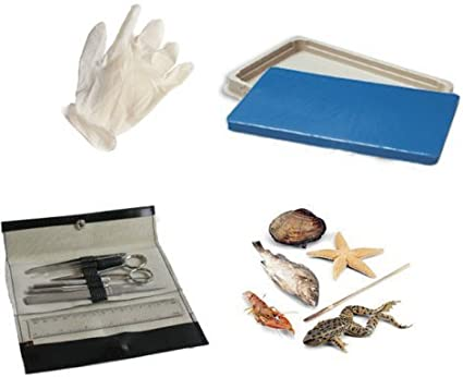 Student Dissection Kit: Science Lab Dissecting Instruments: Amazon ...