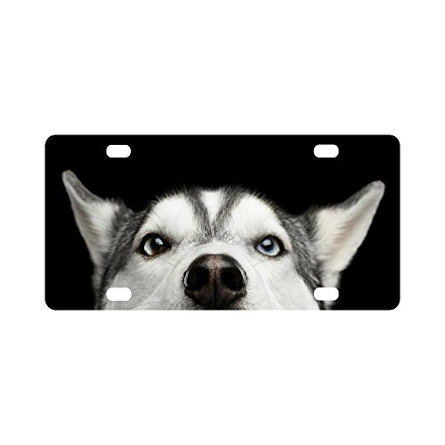 (InterestPrint Funny Close Up Head of Siberian Husky Dog with Blue Eyes Metal License Plate for Car, Metal Auto Tag for Woman Man, 12 x 6 Inch)