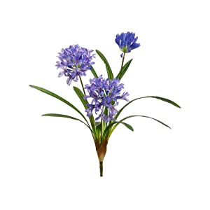 "21"" Agapanthus Bush Lavender Purple (Pack of 12) 15"