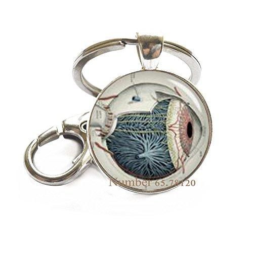 - Human Anatomy Eyeball Keychain,Human Eye Anatomy Key Ring,Science Key Ring,Anatomical Jewelry,BV012 (V1)