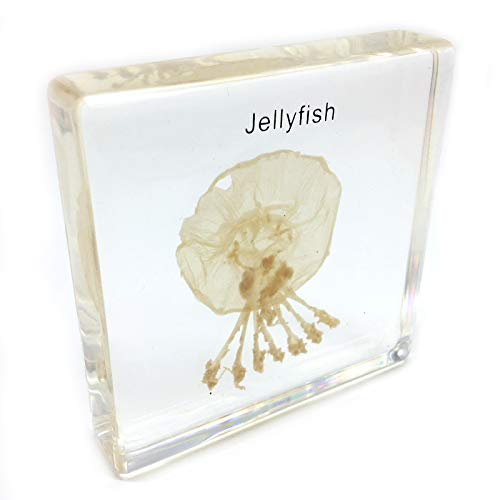Jellyfish Specimen in Acrylic Block Paperweights Science Classroom Specimens for Science Education(2.8x2.8x0.6 Inch)