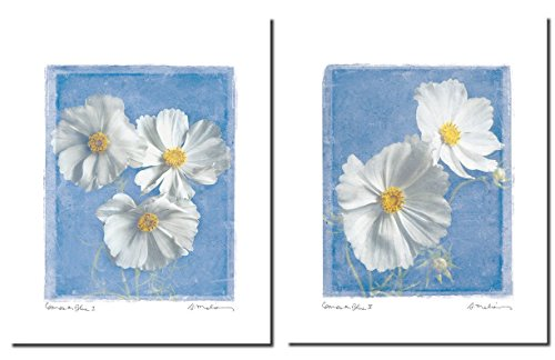 Cosmos on Blue I Lovely White Daisies; Floral - Daisies Poster