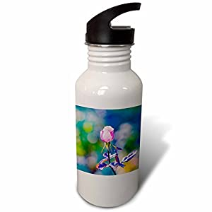 3dRose Alexis Photography - Flowers Rose - Beige rose flower, dark green background - Flip Straw 21oz Water Bottle (wb_270257_2)