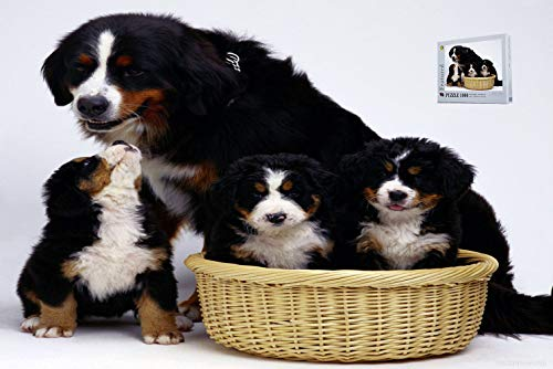 (Geekpuz Bernese Mountain Dog Family Jigsaw Puzzle Fun Noverty Grwon Up Puzzle 1000 Pieces)