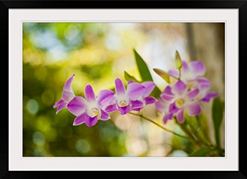 GreatBIGCanvas ''Thai Orchids'' by Erin Berzel Photographic Print with black Frame, 36'' X 24''''