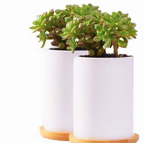 Clound city 2pcs White Ceramic Cylindrical Succulent Planter Pot,Cactus Flower Planters Pots Container for Office,Window,Kitchen and Balcony(2PCS)