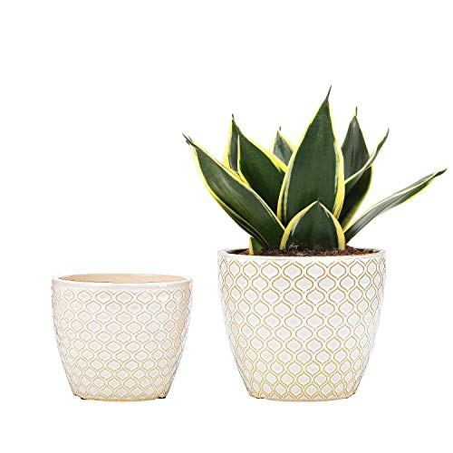 Ceramic Flower Pots Plants Containers – 6.5 and 5.5 Inch Planter Pot with Drainage Hole for Succulents,Flower and Plants…