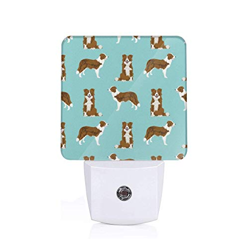 (Border Collie red Coat Dog Breed pet Friendly Gifts for Collie Lovers Plug-in LED Night Light Dusk-to-Dawn Light Sensing, Bedroom, Bathroom, Kitchen, Hallway, Stairs, Energy Efficient)