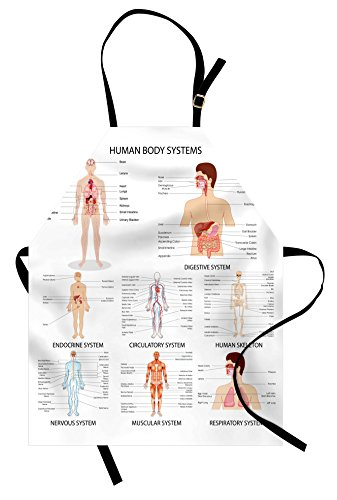 Ambesonne Human Anatomy Apron, Complete Chart Different Organ Body Structures Cell Life Medical Illustration, Unisex Kitchen Bib with Adjustable Neck for Cooking Gardening, Adult Size, White