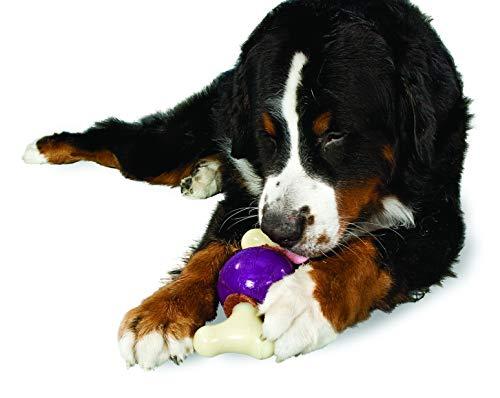 PetSafe Premier Busy Buddy Bouncy Bone Dog Toy, Large