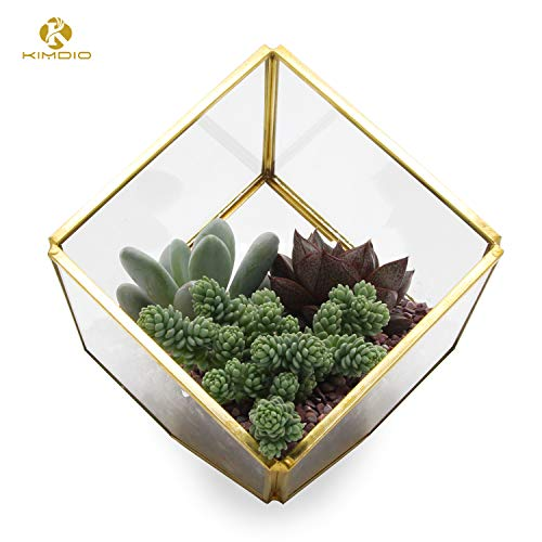 Kimdio Geometric Terrarium Clear Glass Tabletop Planter Air Plant Holder Display for Succulent Fern Moss Air Plants Holder Miniature Outdoor Fairy Garden DIY Gift (Gold-M)]()