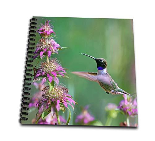 - 3dRose Danita Delimont - Hummingbirds - Black-chinned Hummingbird male at bee balm, Texas, USA.  - Memory Book 12 x 12 inch (db_315064_2)