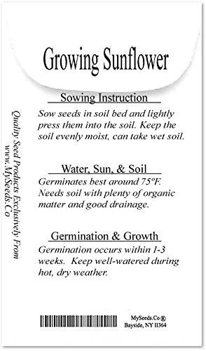 5 LB (45,000+ Seeds) PEREDOVIK Sunflower Seeds - Game Birds & Deer Favorite - Rich in Oil A+ for PLOT FOOD WILDLIFE - Non-GMO Seeds By MySeeds.Co (5 LB Peredovik Sunflower) by MySeeds.Co - Flower Seeds by the LB (Image #2)