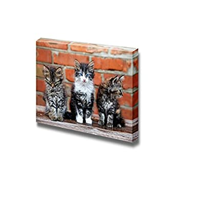 Canvas Prints Wall Art - Three Kittens on Bricks Background Cute Pet/Animal Photograph | Modern Wall Decor/Home Decoration Stretched Gallery Canvas Wrap Giclee Print & Ready to Hang - 12
