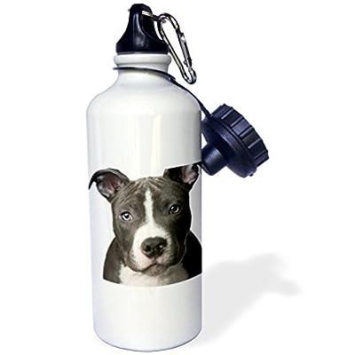 Statuear American Pit Bull Terrier Puppy Aluminium 567gram Bouteille d'eau 600ml Cadeau