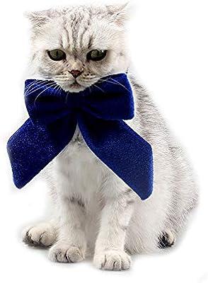 Winkey Big Bow - Corbata para Gato o Perro, diseño clásico: Amazon ...
