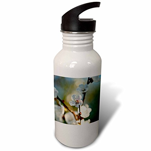 3dRose Alexis Photography - Flowers Sakura Beautiful - Beautiful Japanese apricot flower, yellow stamens, soft beige colors - Flip Straw 21oz Water Bottle (wb_286682_2) by 3dRose