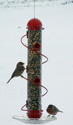 Songbird Essentials SEBQSBF3R 17