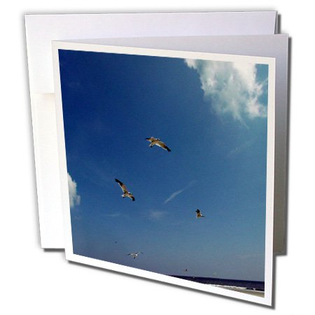 Gull Trio Sea (3dRose Dawn Gagnon Photography - Beach Scenes - Seagulls in flight, a trio flying against a vivid blue beach sky - 12 Greeting Cards with envelopes (gc_165598_2))