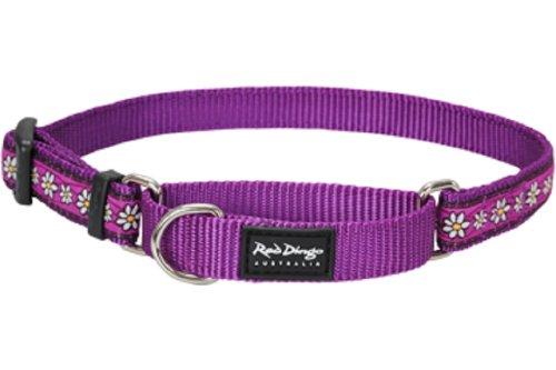 Red Dingo Designer Martingale Dog Collar, Small, Daisy Chain Purple
