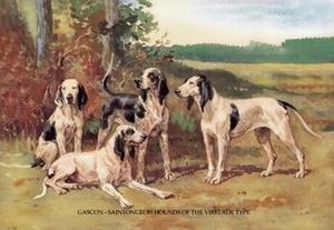 Gascon-Saintongeois Hounds of the Virelade Type Paper poster printed on 12 x 18 stock. ()