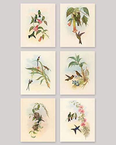 Amazon.com: Hummingbird Prints (Botanical Bird Print