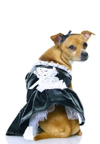 Secret Wishes, French Maid Pet Costume, Size Small ()