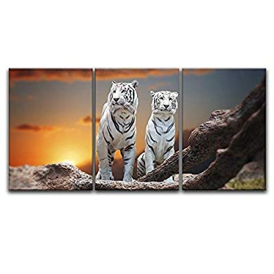 Two White Tigers At Sunset - 3 Panel Canvas Art