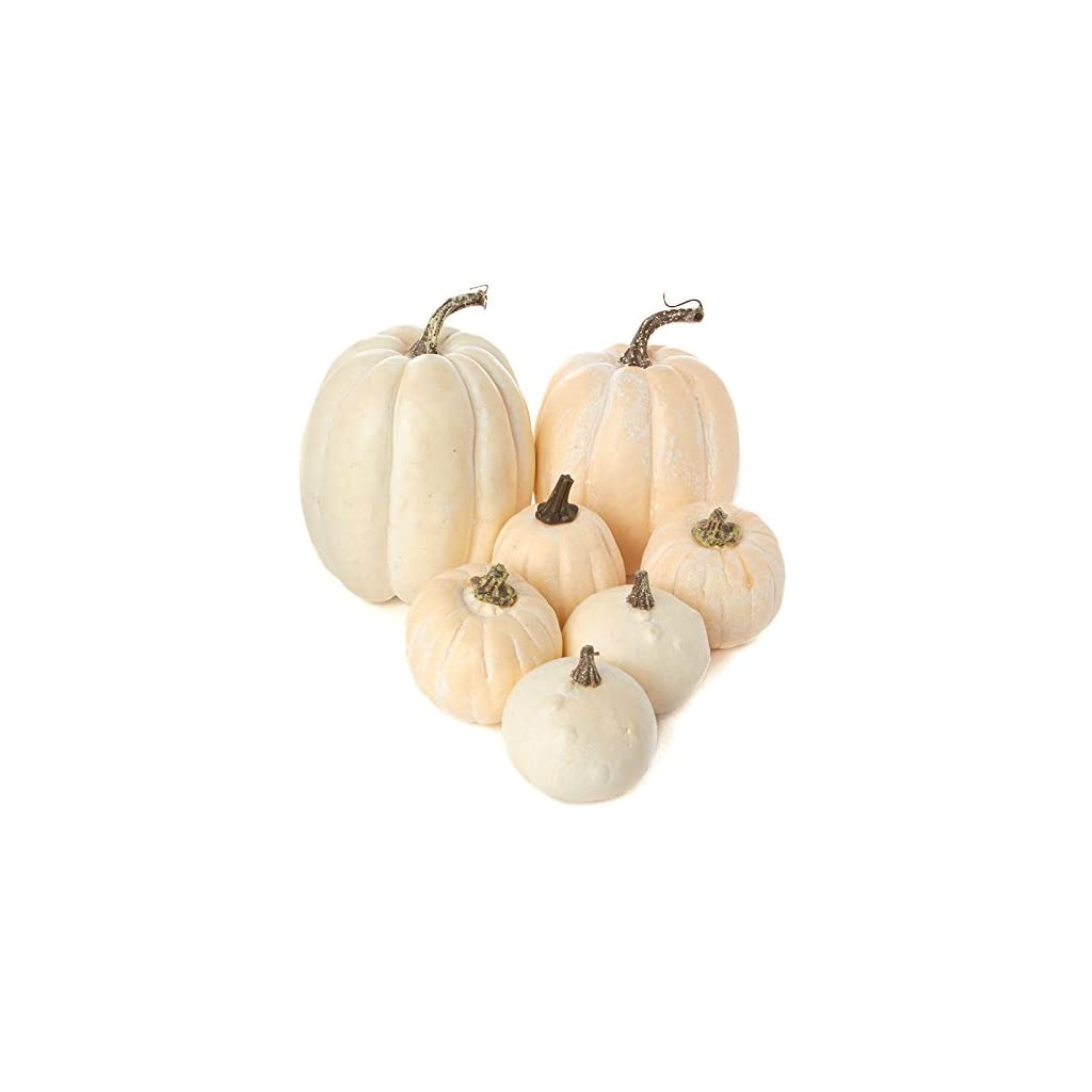 Factory-Direct-Craft-7-Assorted-Size-Harvest-Off-White-Artificial-Pumpkins-Gourds