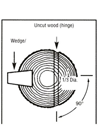 Use Wedge To Fell Trees