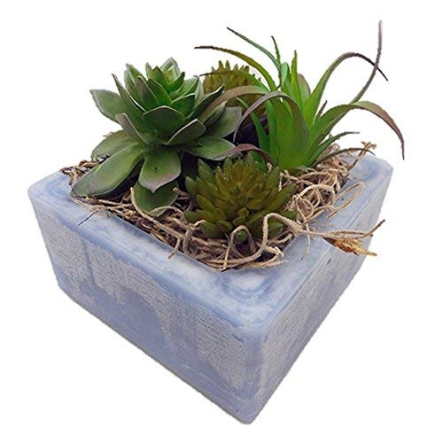 Used, Habersham Candle Co. Cactus Water Succulent GEO Cube for sale  Delivered anywhere in USA