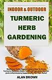 Indoor And Outdoor Turmeric Herb