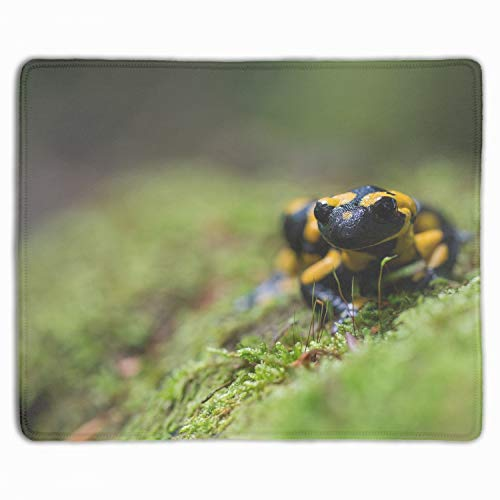 Animals Pavel Hajer Salamanders Macro Mouse Pad with Stitched Edges, Premium-Textured Mouse Mat Pad, Non-Slip Rubber Base Mousepad for Laptop, Computer & PC, 11.8-inch by 9.85-inch, Multicolor ()