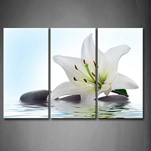 Lily Panel - 9